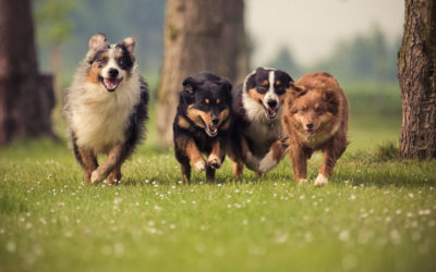 After Lockdown – How to Help Your Dog with Separation Anxiety